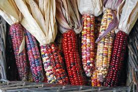 survive peak growing field corn