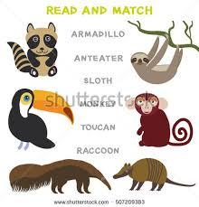 kids words learning game worksheet read stock vector 507209383