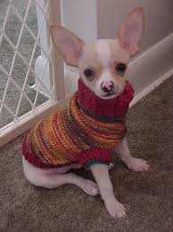 chihuahua sweaters astro sweater i can t find sweaters small enough for the