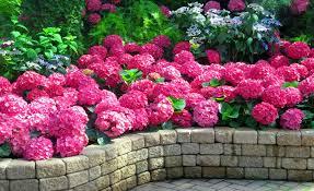 scent flowers freshness leaves pretty lovely fragrance park garden