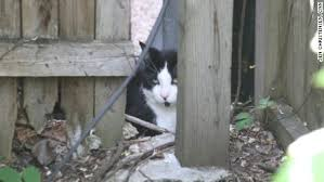 Keep Cats In Backyard Cats The Ultimate Weapon In Public Health Cnn