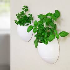 eco pod self watering herb pot set of 2 buy from prezzybox com