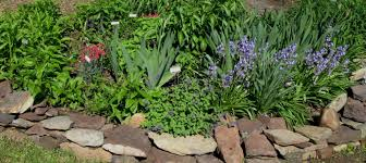 beautiful plants ready set plant tips for getting your garden off to a great