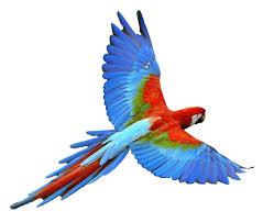 bird bioinformatics r u0026d