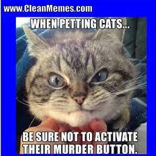 The Best Cat Memes - cat memes clean memes the best the most online page 2