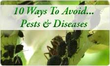 Plant Pests And Diseases - 10 ways to avoid plant pests and diseases