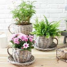 tea cup plant pot 53 cute interior and willow teacup planter gifts