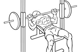 Decline Smith Machine Bench Press Shoulders Secondary Muscles Everkinetic Page 2
