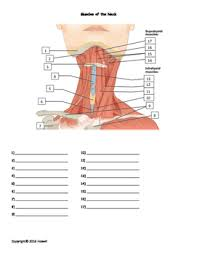 Quiz Anatomy Muscles Of The Neck Quiz Or Worksheet The O U0027jays The Necks And