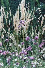 8 best plant lust cussonia images on pinterest flower gardening