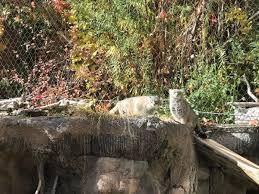 Zoo Lights Salt Lake City by Utah U0027s Hogle Zoo Hoglezoo Twitter