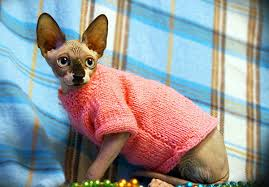 sphynx sweaters cat clothes to ensure no discomfort from sun exposure
