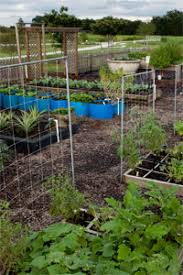 florida gardening calendar uf ifas extension solutions for your