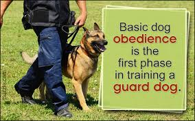 Do All Short Haired Dogs Shed by Guard Dogs That Don U0027t Shed How Many Do You Know