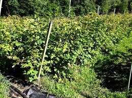 trellis growing systems av trellis system