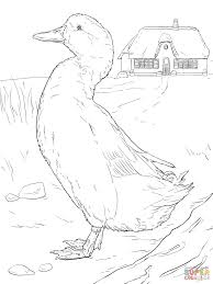 domestic duck coloring page free printable coloring pages