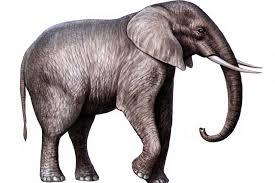 picture of elephant 41 wujinshike com