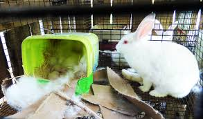 a guide to meat rabbits a sustainable food source living echo