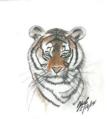 majestic bengal tiger sketch bryansketches drawings