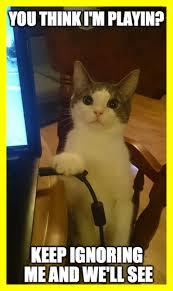 Cute Cat Meme Generator - stunning meme template flip pic for cute cat generator style and