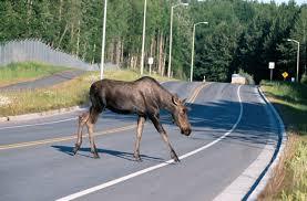 wildlife corridors u2013 hwy 11 south u2013 callander and highway 69