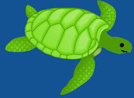 imagenes tortugas verdes green sea turtle images pixabay download free pictures