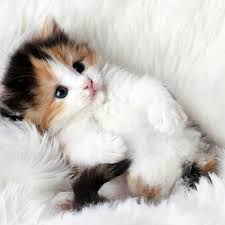 Awesome Quotes About Cats Being - you are never too old to set another goal or to dream a new dream xd