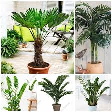 happy farm 5 pcs bag palm seeds indoor ornamental plants