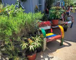 berri native plants redenta u0027s garden 24 photos u0026 30 reviews nurseries u0026 gardening
