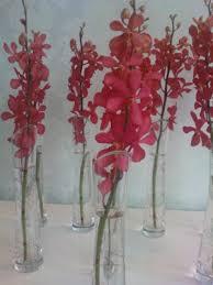 Bud Vase Arrangements Bud Vase Arrangements Valentines Flowers Lily White Florist