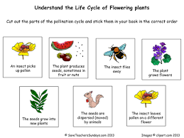 life cycle of flowering plants plan and worksheet by
