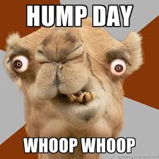 Hump Day Camel Meme - happy hump day meme images humor and funny pics