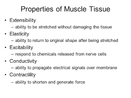 Essentials Of Human Anatomy And Physiology Notes Biology 251 Human Anatomy U0026 Physiology Chapter 10 Muscle Tissue