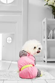 bichon frise long legs amazon com small dog raincoat with hood for bichon frise