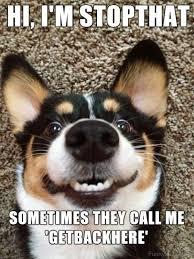 Hyper Dog Meme - 105 ever green dog memes