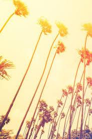 retro california sunset palmtree wall mural 6050