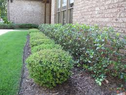 Bushes For Landscaping Small Bushes And Shrubs For Landscaping Door Decorations