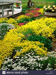 Rock Garden Cground Colorful Blooming Rock Garden With Ground Cover Plants Of Basket