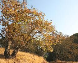 6 fall hikes bay area outdorky