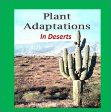 adaptations of deserts plants cactus for kids youtube