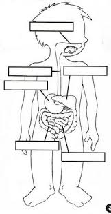 respiratory system worksheets respiratory digestive