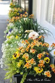 best 25 window boxes summer ideas on pinterest outdoor flower