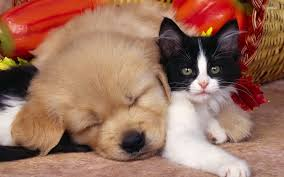 Cute Dogs Wallpapers by Cute Cats And Dogs Wallpaper Wallpapersafari