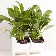 Vertical Garden For Balcony - flower pot wall hanging seeds nursery posts planter grow basket