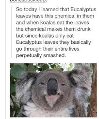 so like everyone else in australia album on imgur