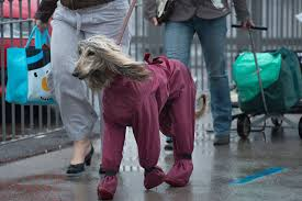 afghan hound in apartment which dog breed do you look like playbuzz