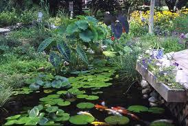 Aquascape Ponds Pond Supplies Aquascape Products Live Pond Fish Aquatic Plants