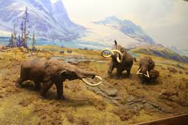 woolly mammoths u0027de extinct u0027 2 wfmynews2