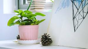 low light indoor trees bedroom plants low light large size of indoor plants and trees low