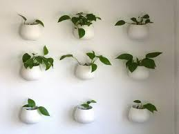 the power of indoor plants earth by anna